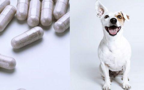 狗狗能够吃益生菌么?