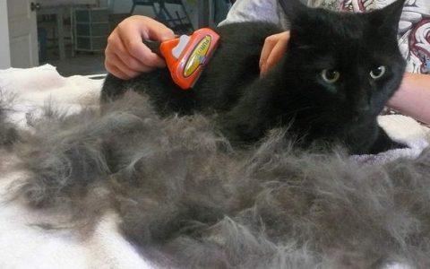 猫咪梳毛刷子推荐