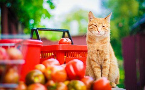 猫咪可以吃水果么?宠物猫能吃哪些水果