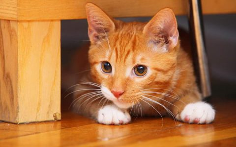 带猫咪搬家的时候有哪些注意事项?
