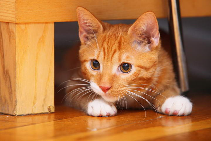 让猫咪搬进新家前,务必确认是否已加装铁网或隐形铁窗、安全扣等,以及防堵好所有秘密通道。