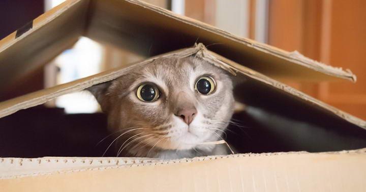 搬到新家大致安顿好后再让猫咪溜达