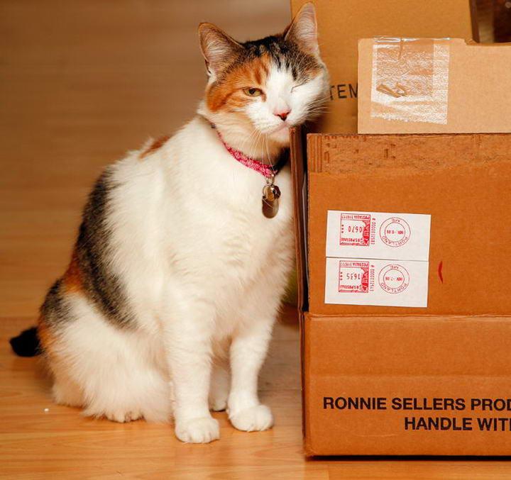搬家对猫咪来说也是重要的大事