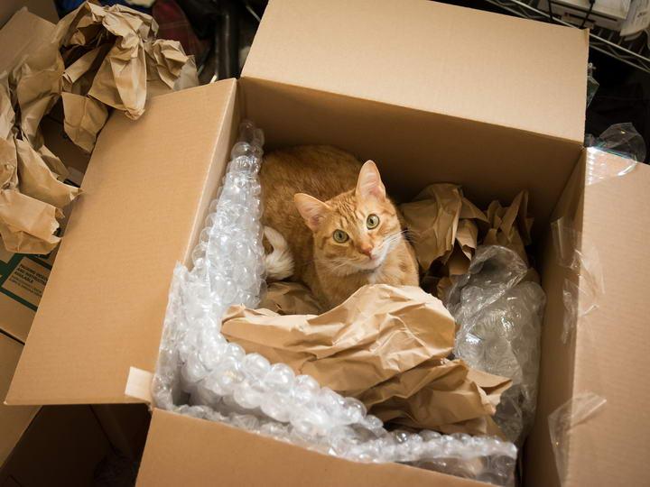 猫咪抵达新家时,最好将它们隔离在房间,待熟悉新环境气味以及清理好打包用品时在让它们出来。
