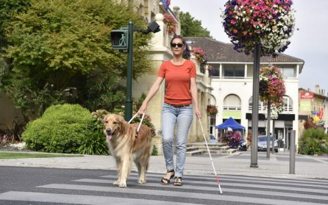 教你如何辨识导盲犬,以及我们要配合做的事情