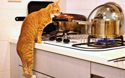 如何阻止猫咪进入到厨房?