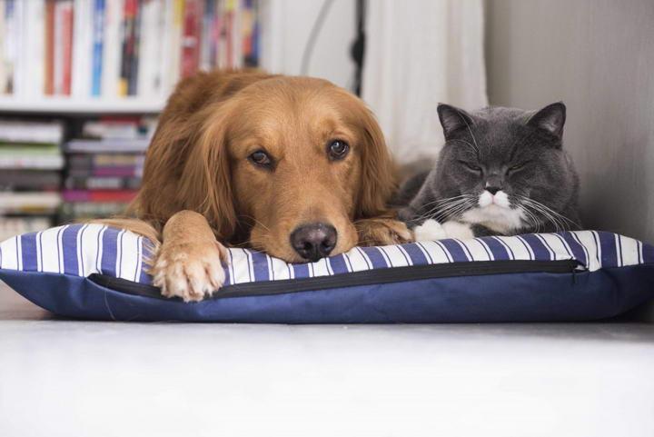 宠物用品的材质选用不当会导致过敏反应,羊毛羽绒会导致猫咪狗狗过敏