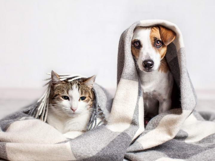 其他宠物也能导致宠物猫或宠物狗过敏