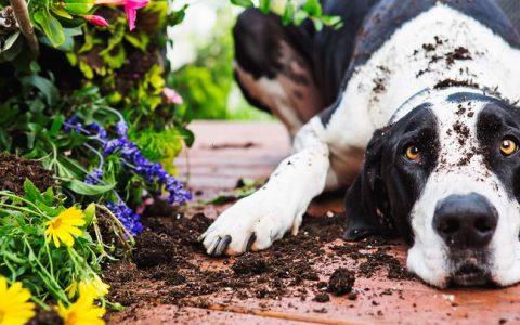 家中的室内植物盆栽绿植会导致宠物狗狗猫咪过敏