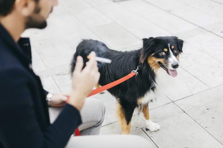 抽烟也会导致宠物猫咪狗狗过敏,吸烟的香烟烟雾是一种过敏原