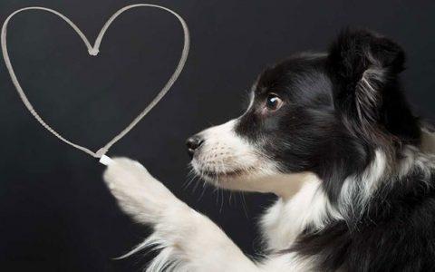 除了身体健康,更应该关注狗狗心灵健康的6点