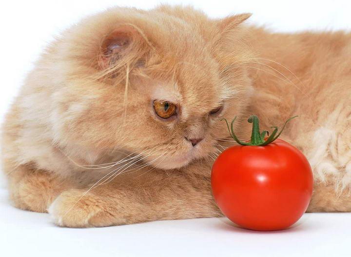 10种对猫咪有毒的蔬菜和水果