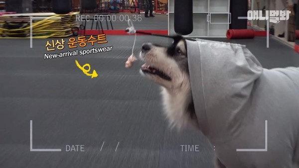 【分享】另类减肥法帮助肥胖狗狗减肥