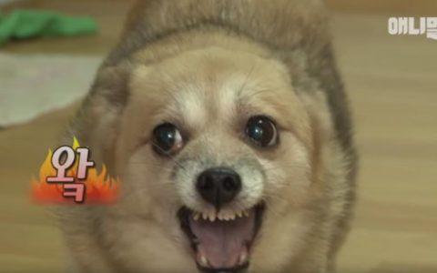 【分享】如何训练能够让狗狗接纳新的家庭成员