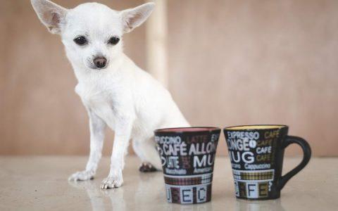 不要给狗狗乱喝水,宠物狗要小心酒精咖啡矿泉水