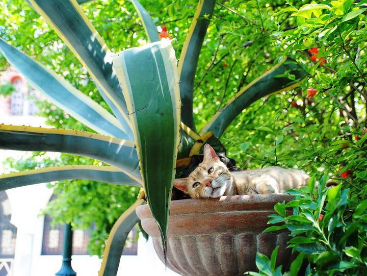 10种对猫咪有毒的花卉:水仙花郁金香菊花上榜