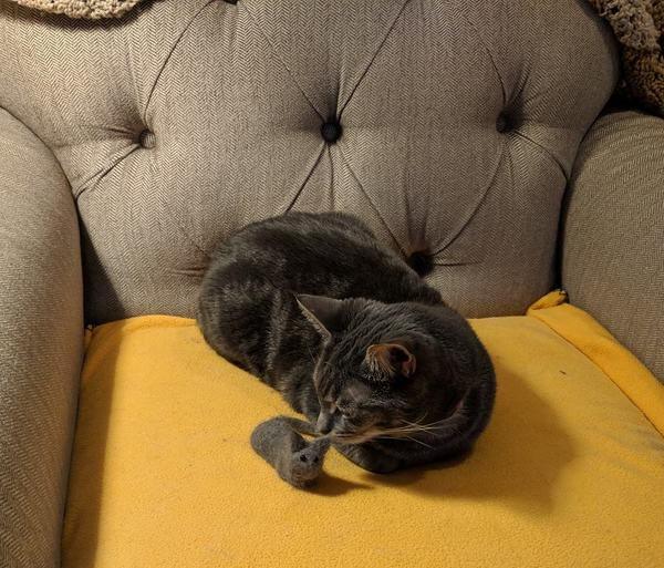 主人用猫毛做了一个猫毛毡小猫,猫咪一脸嫌弃
