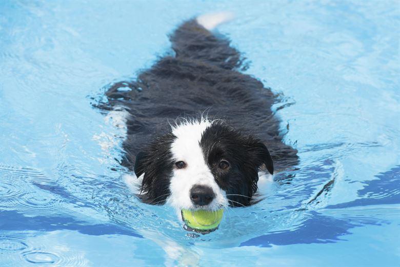 把狗狗的身体弄湿