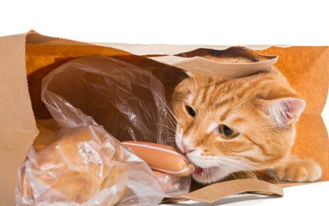 为什么猫咪有的时候会吃塑料袋?