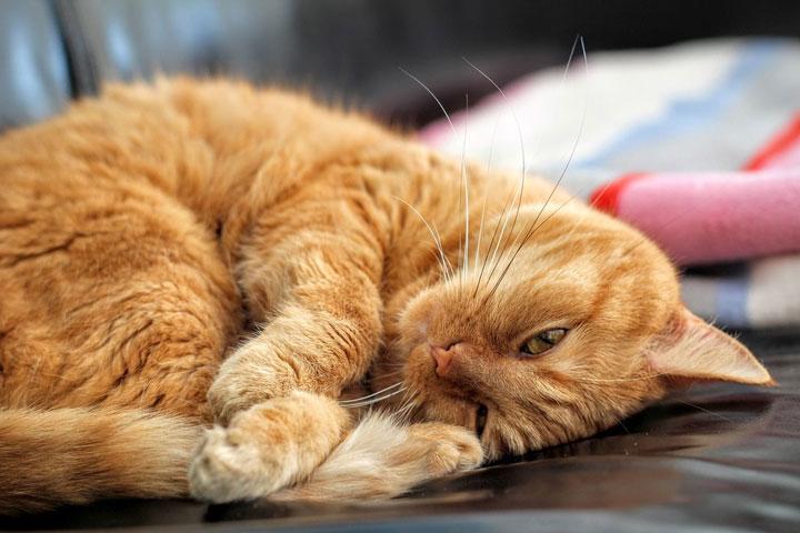 猫咪缓慢眨眼睛代表了什么意思?