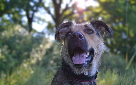 让狗狗在夏天保持凉爽的6个技巧