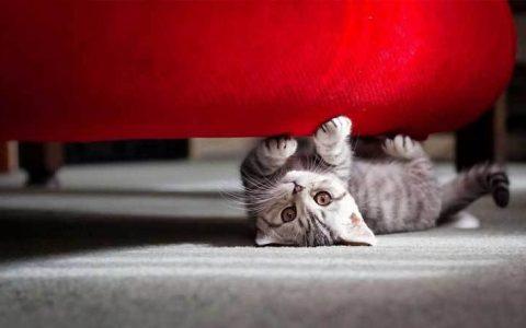如何阻止猫咪抓沙发等家具?