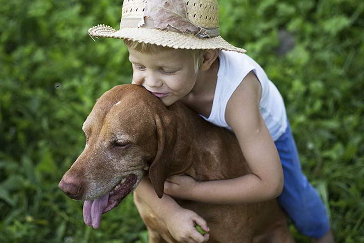 狗狗老年痴呆症的五种症状