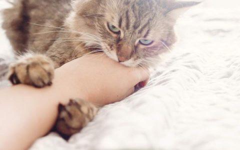 不能大意了:被猫咪咬伤可能患骨髓炎