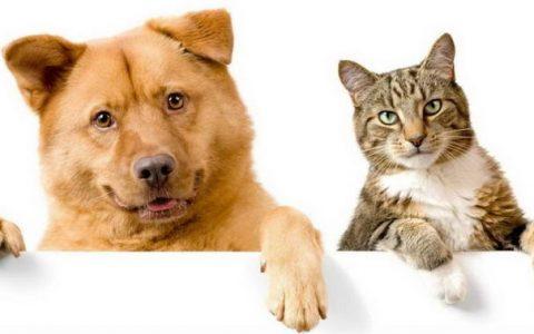 养猫和养狗,哪一种更让人感到幸福?