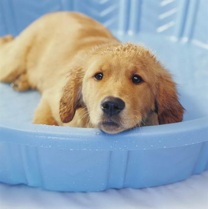 夏季户外保持幼犬凉爽的5种方法