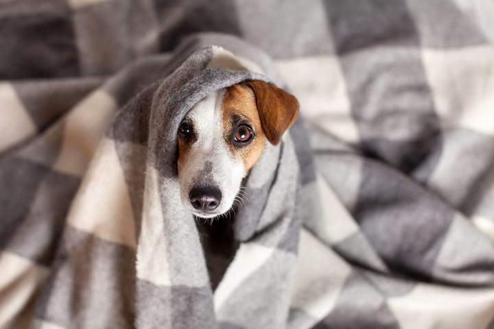 为什么狗狗会发抖?宠物狗发抖的原因