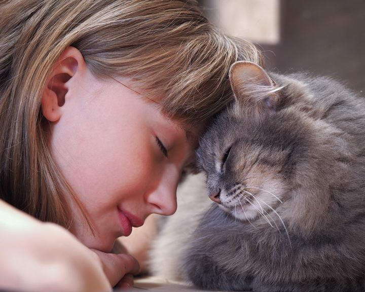 猫咪会照顾铲屎官的三个证据?
