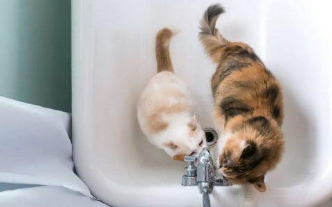 为什么你上厕所的时候猫咪想要进来?