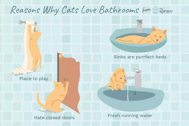 为什么你上厕所的时候猫咪想要进来?猫咪喜欢浴室和卫生间