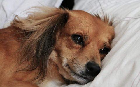 安乐死还是坚持治疗?美国兽医提出7大指标判断狗狗是否安乐死