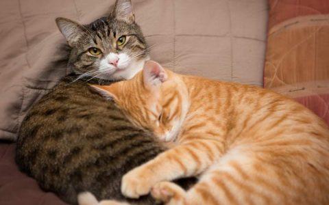 专家教你如何让两只陌生猫咪和平共处一室