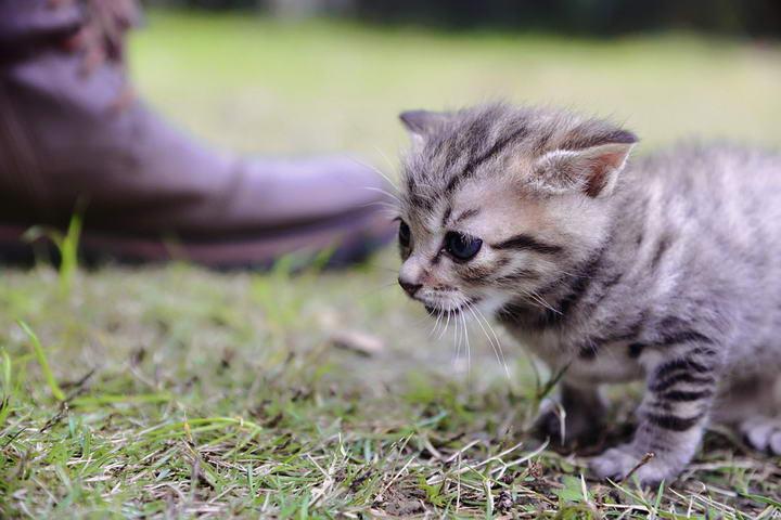一个月的小奶猫要怎么喂养?幼猫喂养注意事项