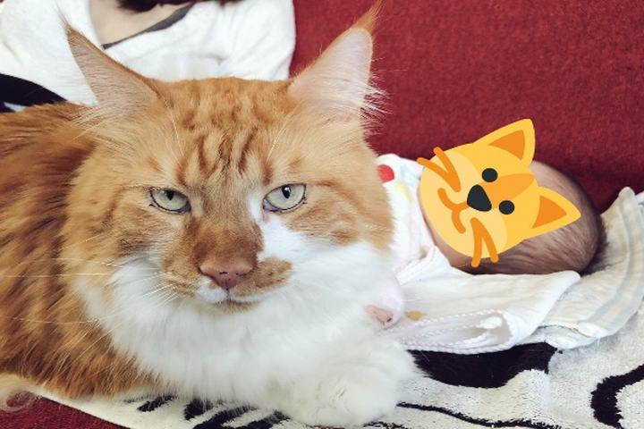 猫咪会在婴儿睡觉时监控是否有不明人士意图接近(图/twitter@kuroro_rin)