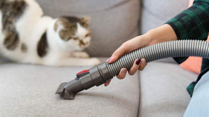 如何训练让猫咪习惯吸尘器的声音
