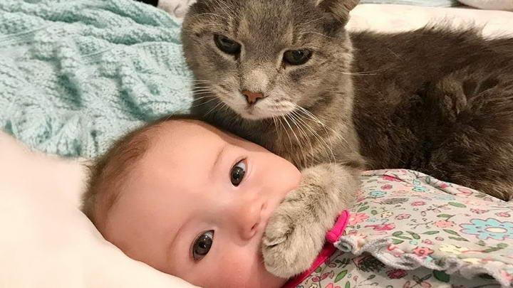 如何训练让猫咪认识和习惯婴儿