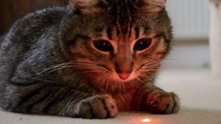为什么猫咪喜欢追着激光光斑玩?