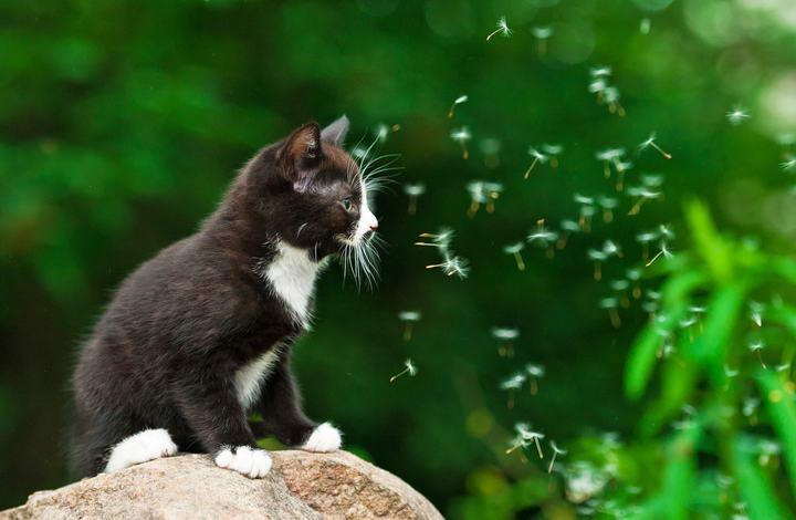 夏天蚊虫多,做好猫咪的心丝虫预防和治疗工作