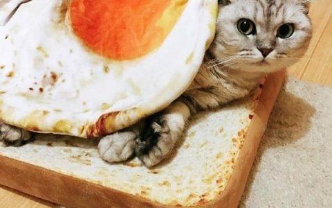 猫咪不能吃生鸡蛋白