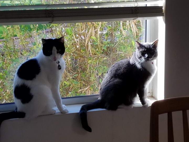 养第二只猫的注意事项,新猫老猫的初次见面