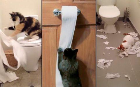 如何防止猫咪玩卷纸?宠物猫祸害厕所卫生纸怎么办?