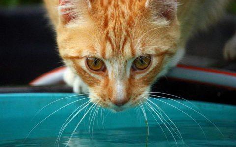 引诱猫咪多喝水的小诀窍