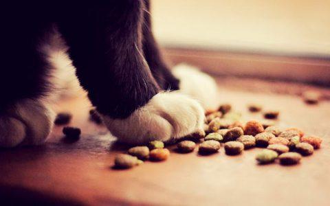 老年猫咪挑食怎么办?五招解决宠物猫挑食的毛病