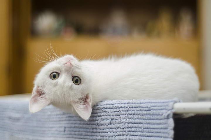猫咪露肚子≠展现友好,不要急着去摸