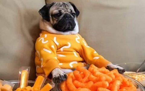四招解决狗狗食欲不振的问题,宠物狗挑食怎么办?