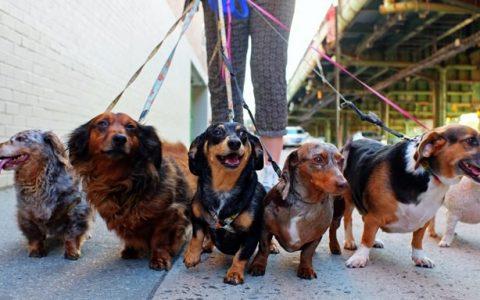 出门遛狗一定要牵狗绳,否则容易产生四大后果